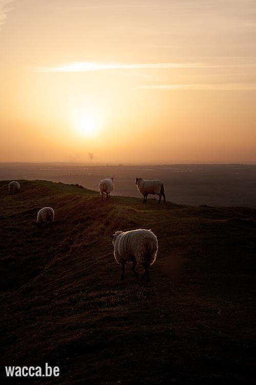 Engeland_Natuur2_Wacca