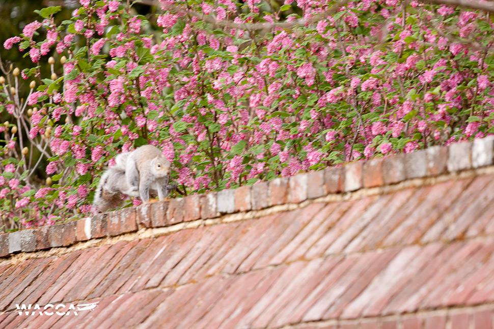 engeland-knole-garden-wacca-2-02