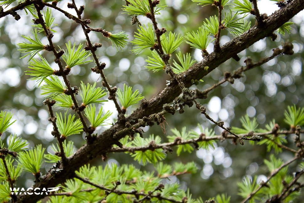 engeland-knole-garden-wacca-2-06