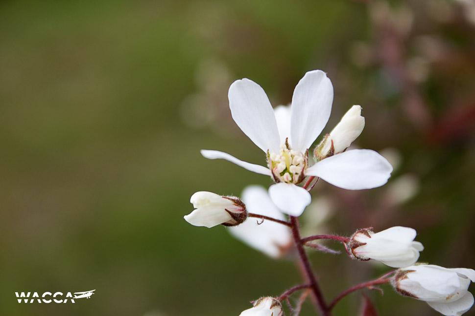 engeland-knole-garden-wacca-2-11