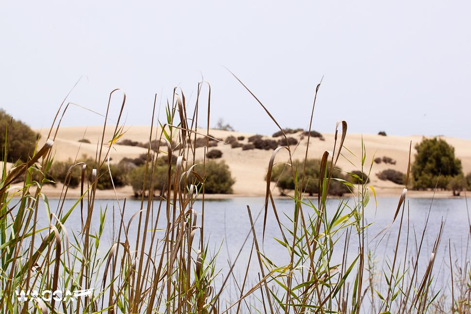 dunas-de-maspalomas-gran-canaria