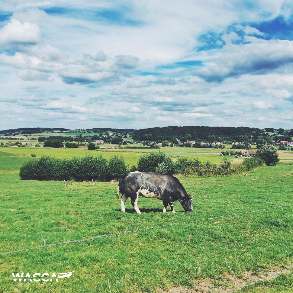 wacca-koersen-140km-01